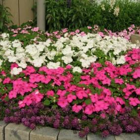 Цветочный микс из многолетних растений