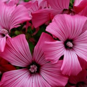 Оригинальная форма лепестков на розовых цветках