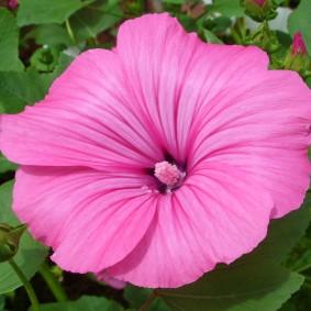 Яркий цветок на ветке травянистого растения