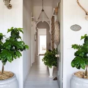 Живые растения в интерьере коридора