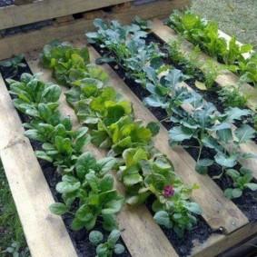 Высокие грядки из досок для овощей