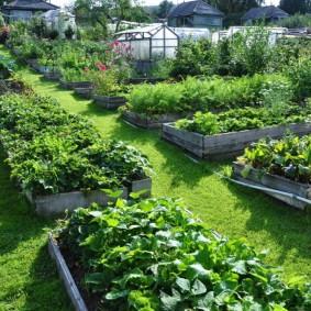 Красивый огород с аккуратными грядками