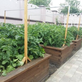 Выращивание помидоры в грядках из досок