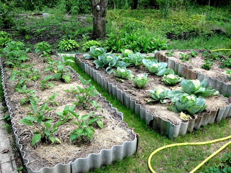 поделитесь грядки на огороде из шифера фото нас представлены