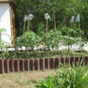 Грядка с помидорами на загородной даче