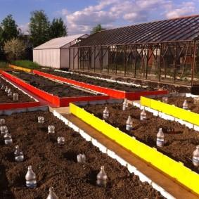 Цветные грядки в фермерском хозяйстве