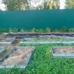 Ухоженный огород на участке с забором из профлиста