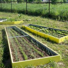 Длинные грядки с рассадой овощей