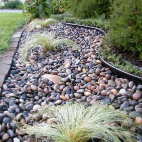 Травянистые растения среди мелкого камня