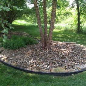 Приствольный круг дерева с гравийной засыпкой
