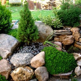 Хвойные растения среди камней разнообразной формы