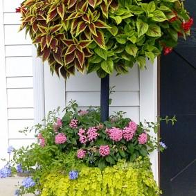 Ампельные колеусы разнообразных цветов