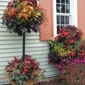 Садовая композиция из декоративных цветов