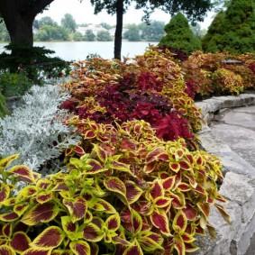 Красивые цветы за каменным бордюром
