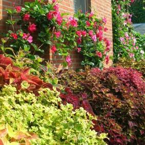 Ампельные растения на кирпичной стене дома
