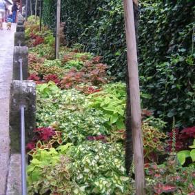 Миксбордер с однолетними растениями в парке отдыха