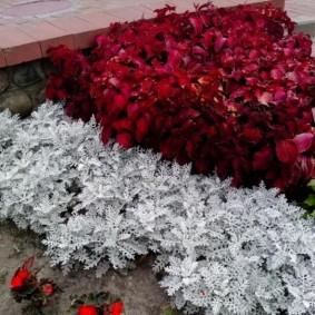 Декоративные растения с контрастными листьями