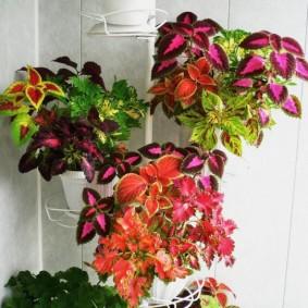 Подвесные горшки с комнатными цветами