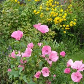 Комбинация розовых и желтых цветов в саду