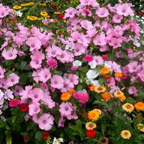 Цветочная полянка на дачном участке