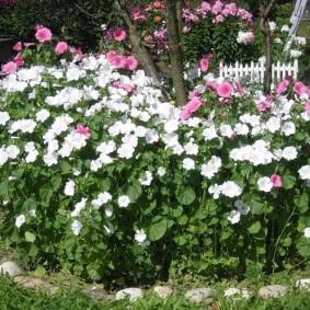 Цветущая клумба в середине лета