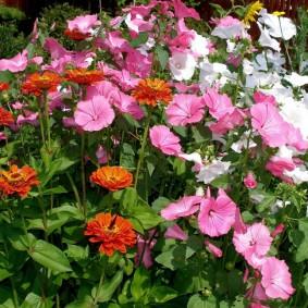 Миксбордер с цветущими растениями в саду на участке
