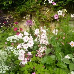Дикая клумба с однолетними цветами