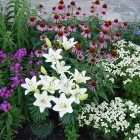 Белые лилии в садовом ландшафте
