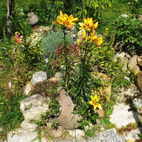 Садовая лилия на каменистой клумбе