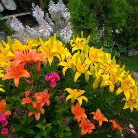 Клумба на даче с лилиями оранжевого и желтого цветов