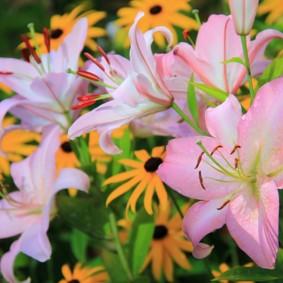 Розово-белые цветки большого размера