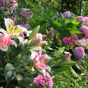 Садовый миксбордер с гортензиями илилиями