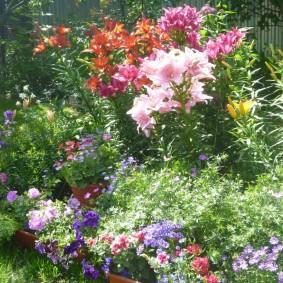 Цветочная клумба на загородном участке