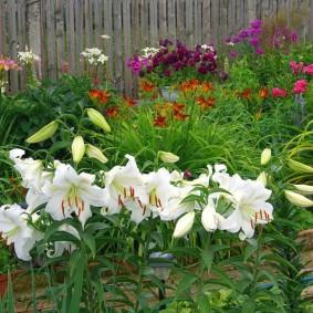 Белые цветки на зеленом фоне травянистых растений