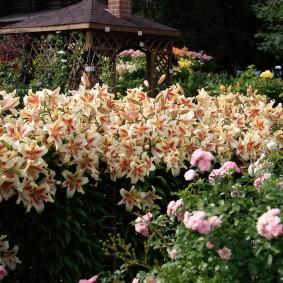 Полосатые цветы в ландшафтном дизайне