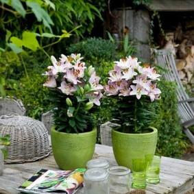 Многолетние цветы в глиняных горшках