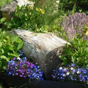 Старый пенек на садовой клумбе