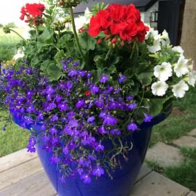 Садовые цветы в пластиковом горшке