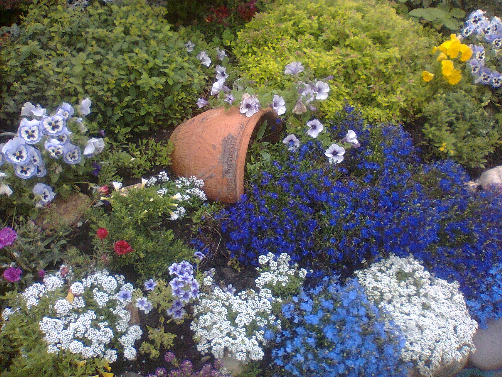 лобелия фото цветов в клумбе идеи немного несдержана, время