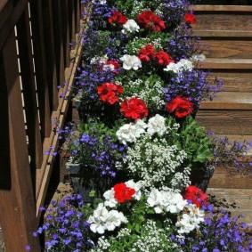 Горшочки с цветами на деревянной лестнице