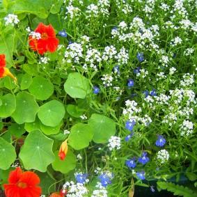 Красные и белые цветы в ландшафте сада
