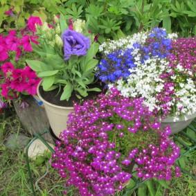Горшки с садовыми цветами в тени кустиков