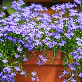 Нежно-сиреневые цветки на ветках без листьев