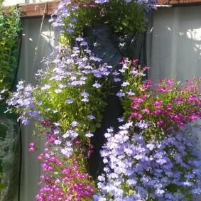 Декор забора цветущими растениями