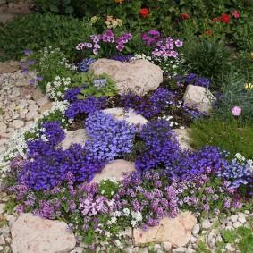 Каменистая клумба с неприхотливыми цветами
