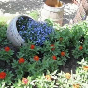 Мелкие цветы на садовой клумбе