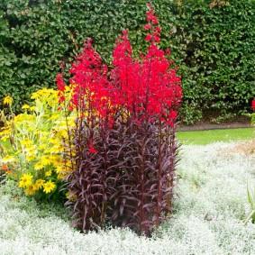 Сочетание желтых цветов с красными в ландшафте сада