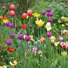 Фото тюльпанов разнообразной окраски