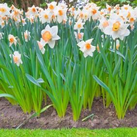 Грядка с цветами на загородном участке