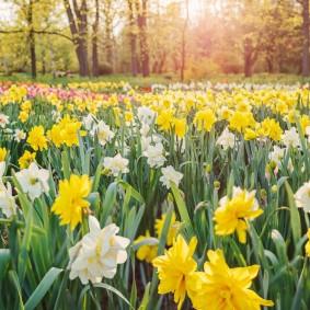 Цветочная поляна с луковичными растениями